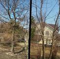 Обрезка деревьев, Садовник, Уход за садом, Озеленение