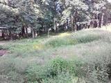 Земельный участок 2. 9 га (СНТ, ДНП)